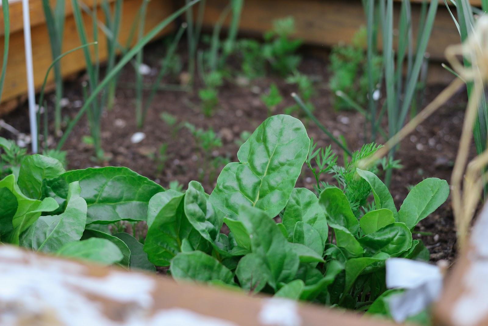 veggie-garden-compost