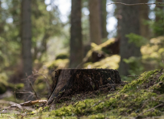 Stumped over how to remove a tree stump? here's how