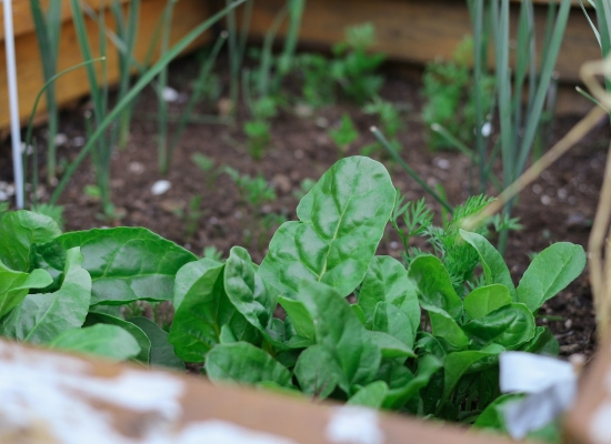 Composting 101: a beginner's guide to garden composting and recycling